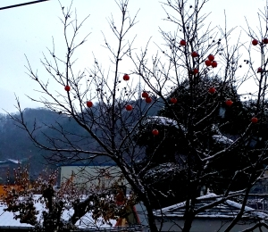 Persimmon tree in the snow, Cheongju, December 2014
