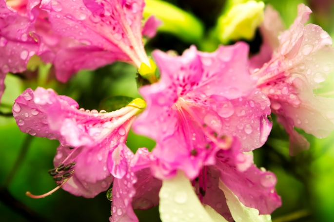 Flowers after a spring shower